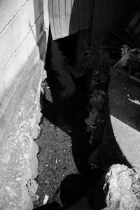 水の流れ - 節操のない写真館