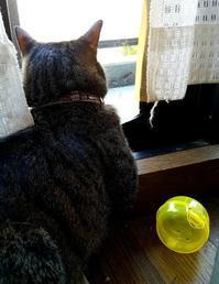 日陰が好き - キジトラ猫のトラちゃんダイアリー
