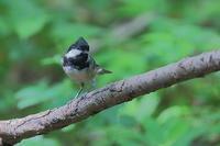 鳥枯れになると、ヒガラでも貴重 - 上州自然散策2