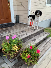 夏のガーデニング - 花の庭づくり庭ぐらしガーデニングキララ