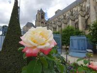 立秋の薔薇 - フランス Bons vivants des marais Ⅱ