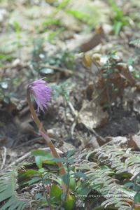 5月の山活⑤**山頂の春はのんびりやってくる - きまぐれ*風音・・kanon・・