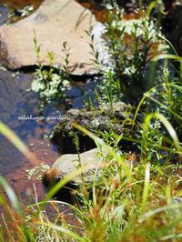 水辺のトラノオ - 永楽屋ガーデン    自然を愛する スローライフな庭造り