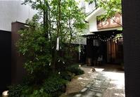 老舗の七夕 - monn-sann