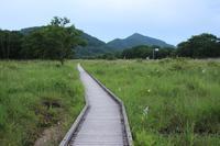 榛名山 ユウスゲ(1) (2019/8/7撮影) - toshiさんのお気楽ブログ