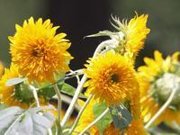 『フラワーパーク江南の花散歩~』 - 自然風の自然風だより