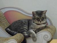 可愛いシュシュ猫たち - Magnolia Lane