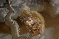秋の夜長の自然文化園④~闇の訪れとともにムササビは駆け巡る(October 2018) - 続々・動物園ありマス。