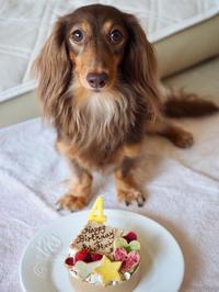 19年8月10日 あんず、4歳のお誕生日! - 旅行犬 さくら 桃子 あんず 日記