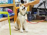 夜の「犬のしつけ方教室」 - SUPER DOGS blog