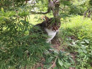 暑いので木陰で - 気まぐれ写真