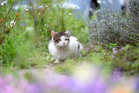 シマオは行方不明 - 猫と夕焼け