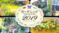 コメリガーデニングコンテスト2019 - 恋子のガーデニング日記
