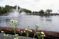 フィルムで撮った梅雨時の公園 - 岳の父ちゃんの PhotoBlog