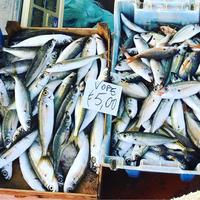 漁船から直売!トラーパニの魚市場でお買い物♩ - 幸せなシチリアの食卓、時々旅