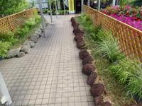 「市花さぎ草展」本日より開催! - 手柄山温室植物園ブログ 『山の上から花だより』