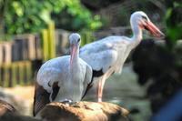 天王寺動物園 - 週末バーダーのBirding記録