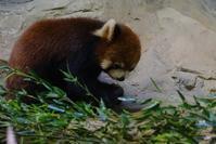 8月11日サマーナイト@Tama Zoo - 動物園に嵌り中2