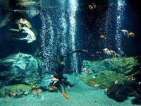 足立区生物園~圧巻の金魚大水槽とサメ水槽の給餌TIME(November 2018) - 続々・動物園ありマス。