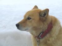 愛犬だったはずなのだけれど… - 自然がいっぱい4は終了しました。