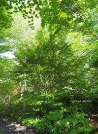 予定調和の雑木林 - 永楽屋ガーデン    自然を愛する スローライフな庭造り