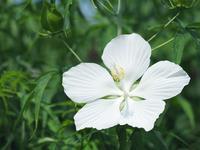 夏のわんぱく公園は花いっぱい12 - 光の音色を聞きながら Ⅳ