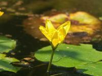灼熱の花 - はーとらんど写真感