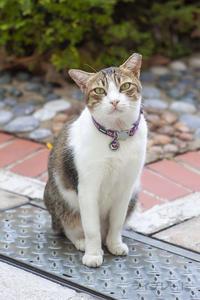 ご近所猫 2019.08.11 - Rayblade Photos