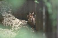 隠れ場所 - 動物園へ行こう