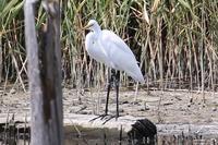 ★今日の速報です - 葛西臨海公園・鳥類園Ⅱ