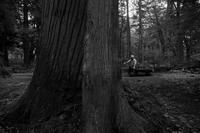 杉の涼 - フォトな日々