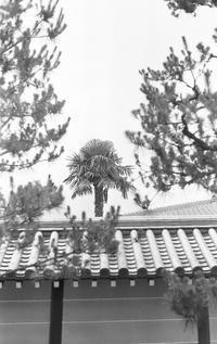 棕櫚百景 - ページをめくるように