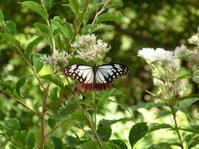 8月11日(日)比婆山の夏 - 庄原市の自然