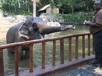 シンガポール動物園に行ってきました♪ - よく飲むオバチャン☆本日のメニュー