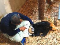 長野市茶臼山動物園の旅行記を姉妹ブログ「レッサーパンダ紀行」にアップしました - (続)レッサーパンダ紀行
