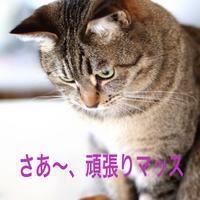にゃんこ劇場「ニャート引越しセンター」 - ゆきなそう  猫とガーデニングの日記