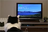 世界ネコ歩きアメリカ・シアトル - ときどき☆タス