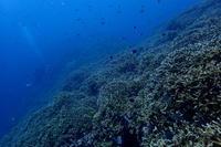 19.8.12海、落ち着き始めました・・が。 - 沖縄本島 島んちゅガイドの『ダイビング日誌』