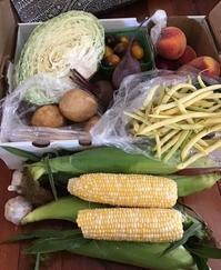 Farmers Market(St Thomas)/韓国麺料理なぜ見栄を張った? - タイタスのいるところ      London Ontario