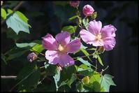 千住散歩-781 - Camellia-shige Gallery 2