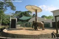 2019年8月王子動物園2その1 - ハープの徒然草