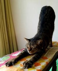 よう寝た - キジトラ猫のトラちゃんダイアリー
