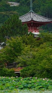 大覚寺 - belakangan ini