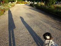 晩夏の光り - フランス Bons vivants des marais Ⅱ