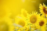 8月の花 - マイ・ライフ