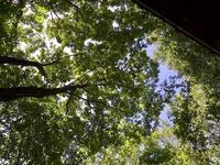 雑木林の中は涼しい - 楽家記(らくがき)