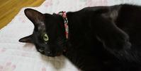 続く猛暑 - 黒猫瓦版