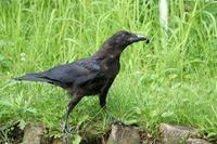 いろいろな鳥 - 暮らしの中で