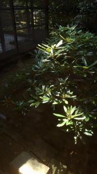 二月堂界隈(12)令和元年盛夏 - 日本写真かるた協会~写真が好きなオッサンのブログ~