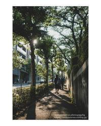 夏の午後 - ♉ mototaurus photography